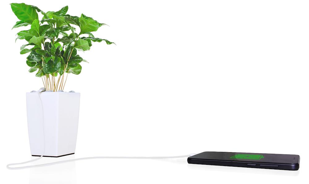 Recharger son iPhone avec une plante